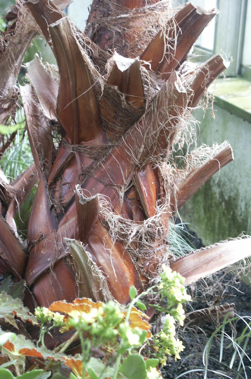 palmenstamm.jpg